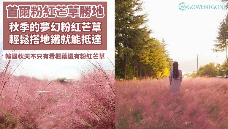 秋季限定!韓國的秋天不只有楓葉,還有夢幻粉紅芒草!精選首爾五大粉紅芒草花海勝地,搭地鐵就能抵達全韓國最大的花園,帶您一同翻山越嶺去賞花~