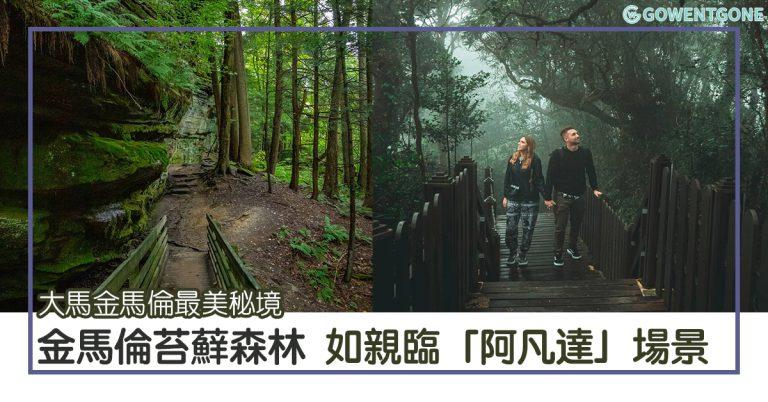 大馬金馬倫苔蘚森林| 金馬倫最美祕境,如親臨「魔戒」及「阿凡達」場景,不見哈比人卻有豬籠草,仙氣滿滿的山林!